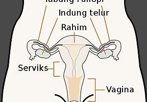 rp_organ-reproduksi-wanita.png
