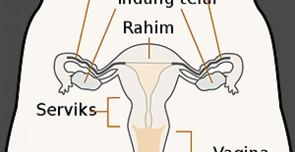 organ-reproduksi-wanita.png
